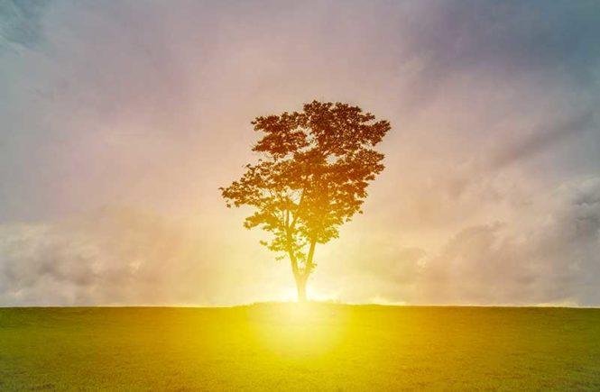 le soleil se couche derrière un arbre